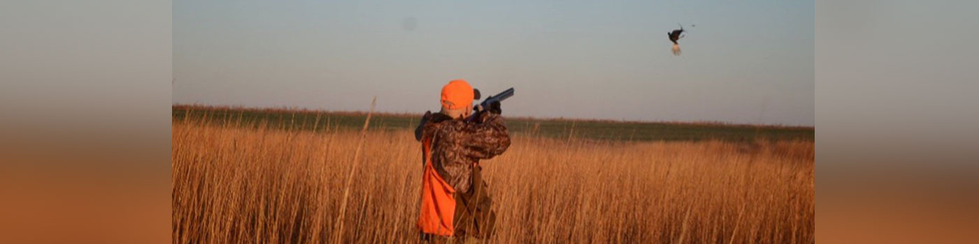 Hunting in a field